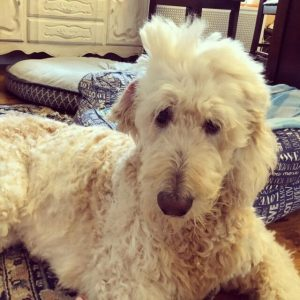 Sleepy Dogs And Cats Caught With Adorable Bedhead