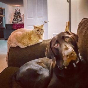 These Cats Aren't Really Liking These Dogs And It's Pretty Funny