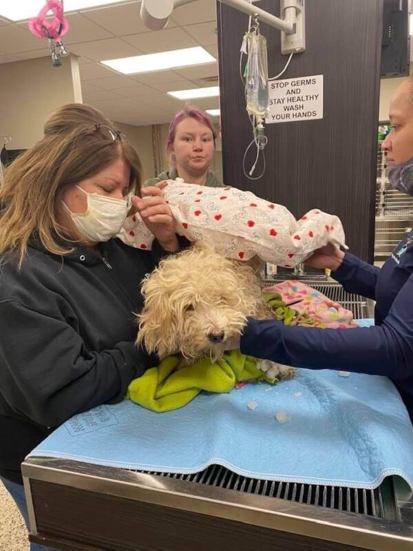 miracle-dog-survives-4-days-on-frigid-river-after-coyote-chase