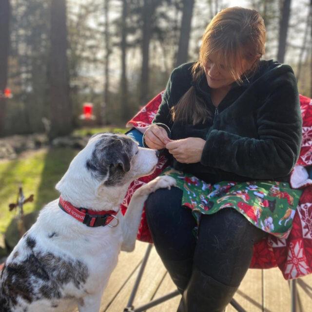 thief-steals-van-with-a-dozen-daycare-dogs-inside