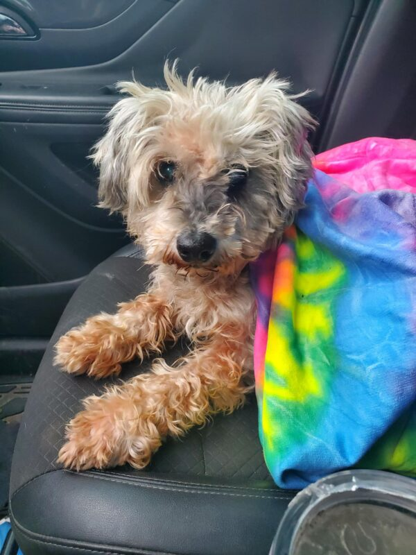 dog-lost-before-hurricane-harvey-finds-her-way-home