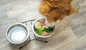 Reasons To Prepare Dog Food At Home