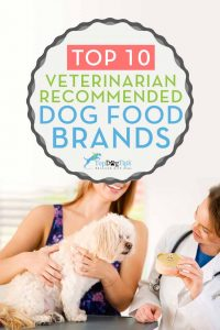 10-vet-recommended-dog-food-brands-that-are-inexpensive-2021