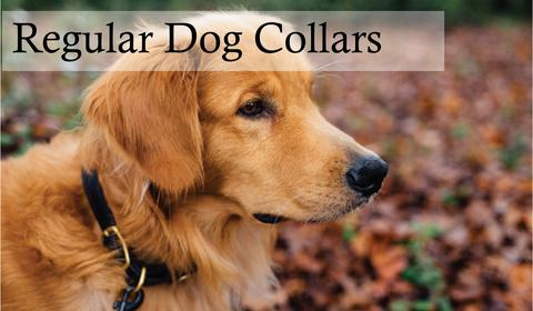 the-complete-guide-to-choosing-with-right-dog-collars