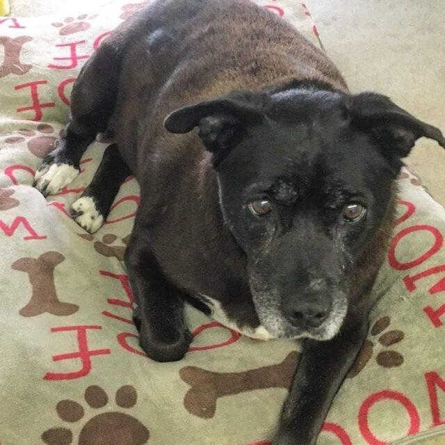 after-11-years-in-a-shelter-senior-dog-finally-finds-her-happy-ending
