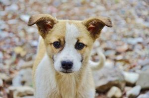 10 Tips For Housetraining A Puppy