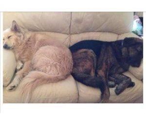 Dog pillow story