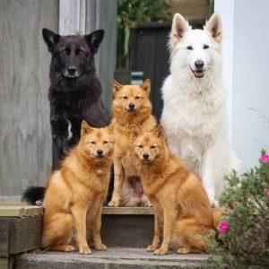 Dog group photo