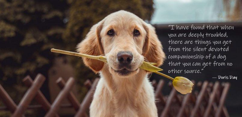 the-healthy-hound-newsletter-59