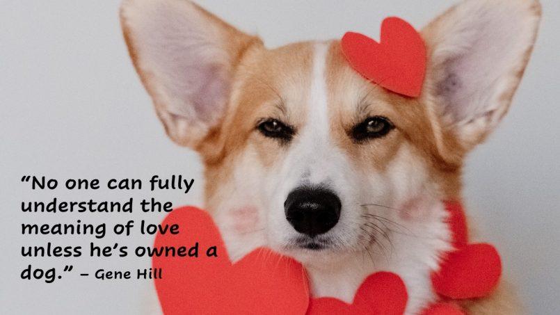 the-healthy-hound-newsletter-58
