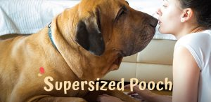 The 6 Biggest Dog Breeds in the World