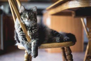 Thanksgiving Pet Safety Tips - Freshpet