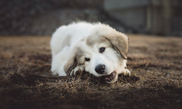 5-health-problems-that-could-be-caused-by-your-dog-food