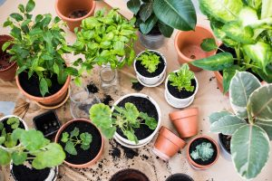 New Gardeners On the Easiest and Most Challenging Plants to Maintain