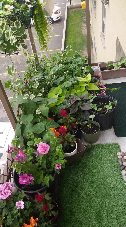 small-balcony-huge-garden-finegardening