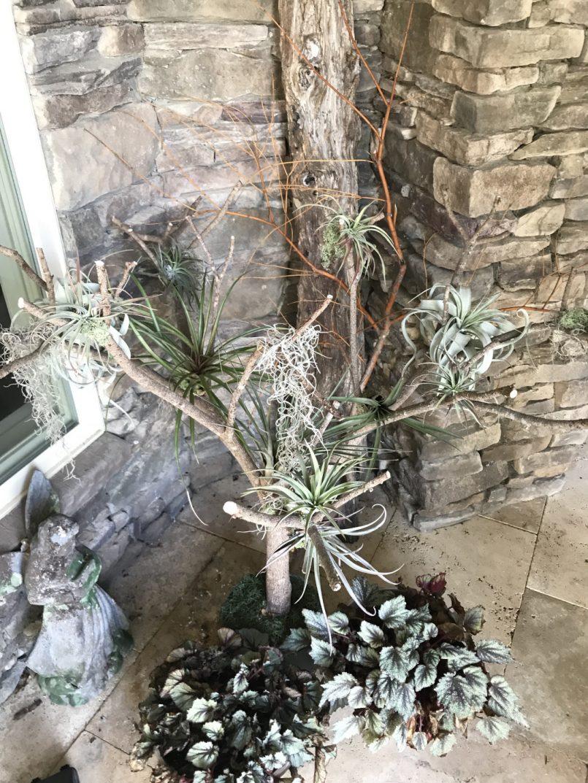 return-to-lydias-garden-finegardening