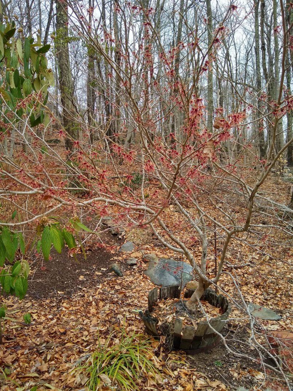 episode-84-underappreciated-plants-for-spring