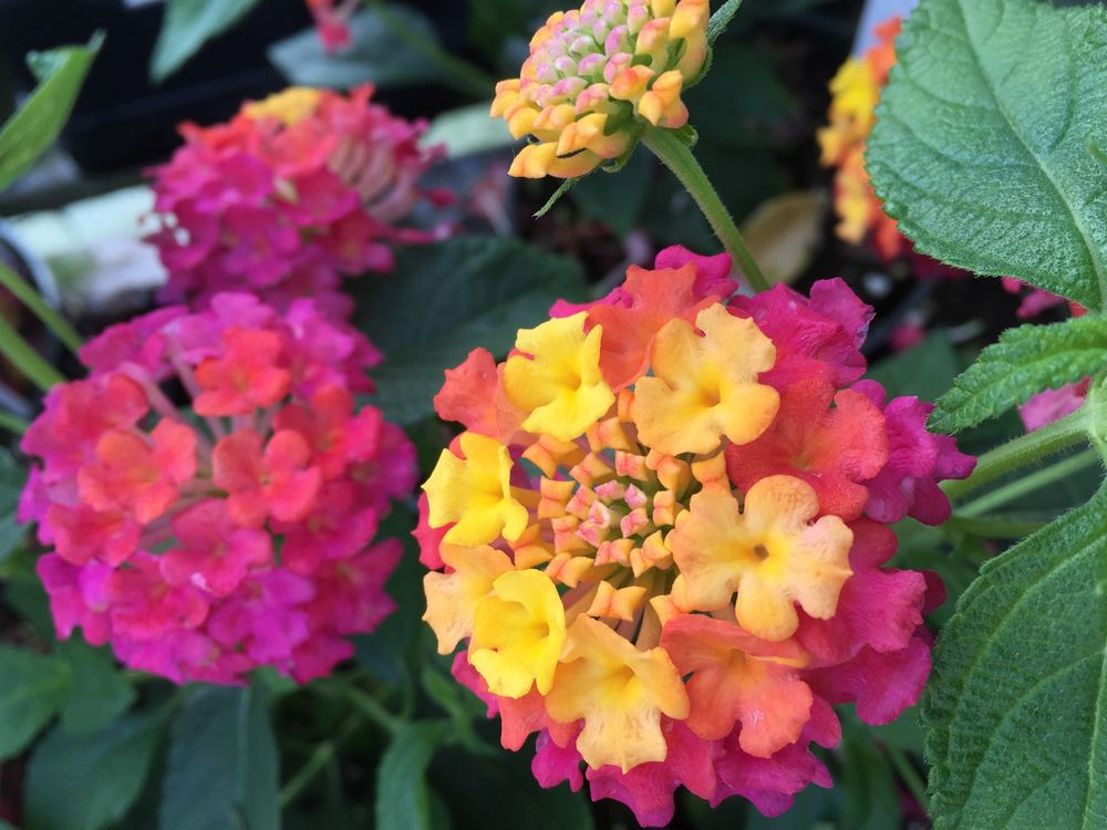 brian-minter-sun-loving-plants-that-like-the-heat