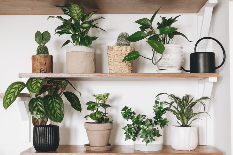 royal-family-favorite-houseplants-per-saveonenergy