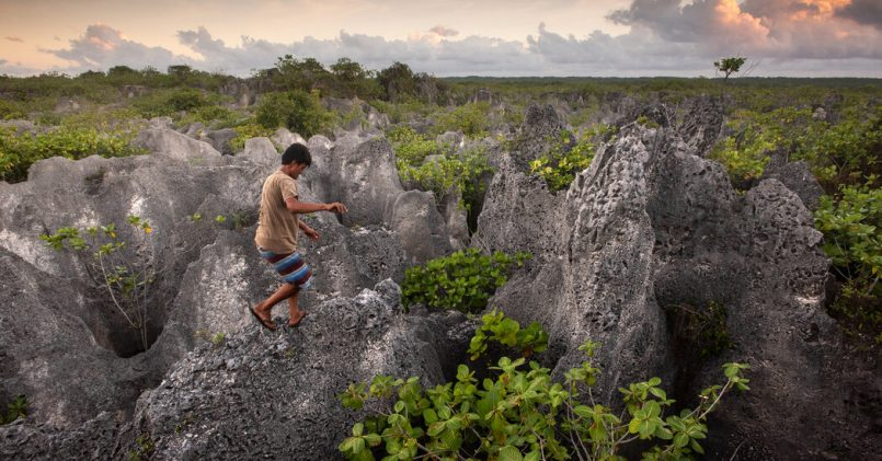 the-perilous-hunt-for-coconut-crabs-on-a-remote-polynesian-island