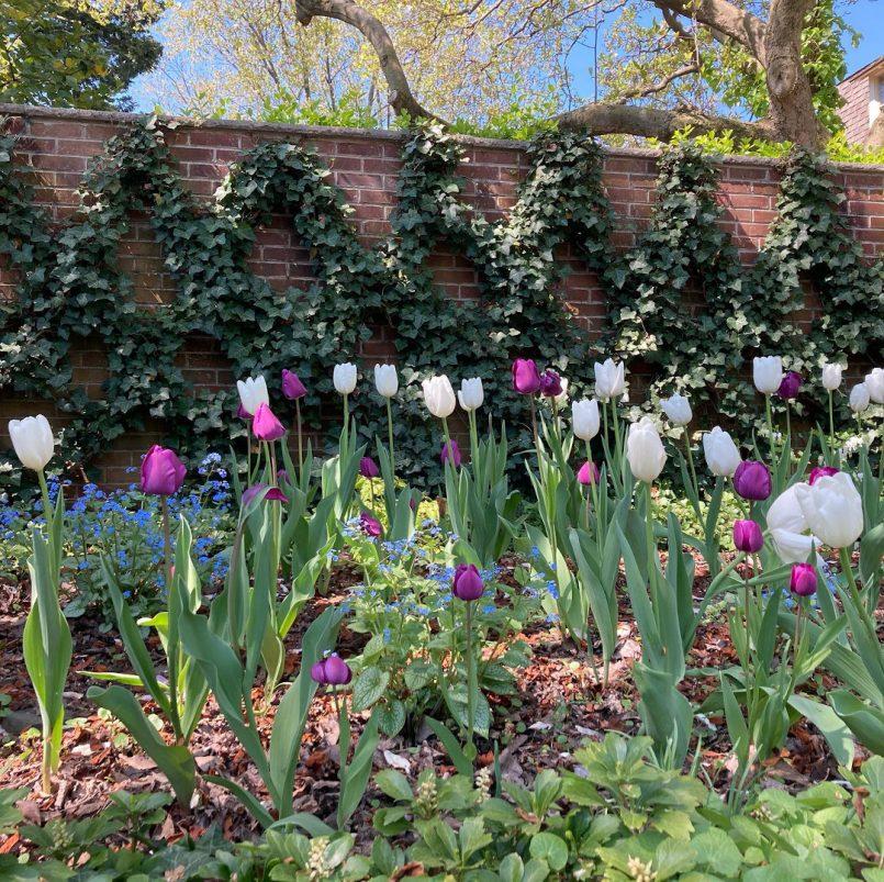 gardens-of-a-philadelphia-townhouse