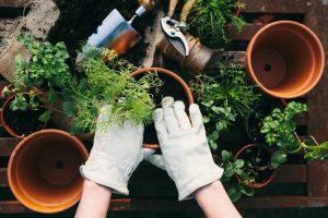 Amazon Alexa Could Help Grow Your Garden